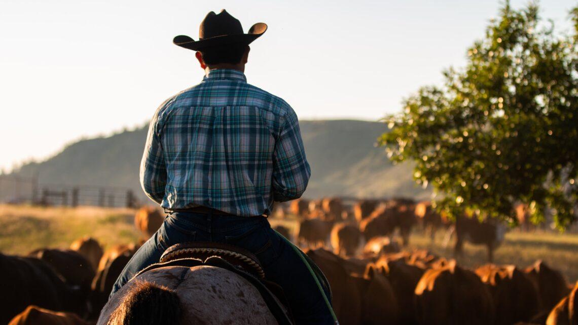 Vita da ranch: una vacanza da cowboy